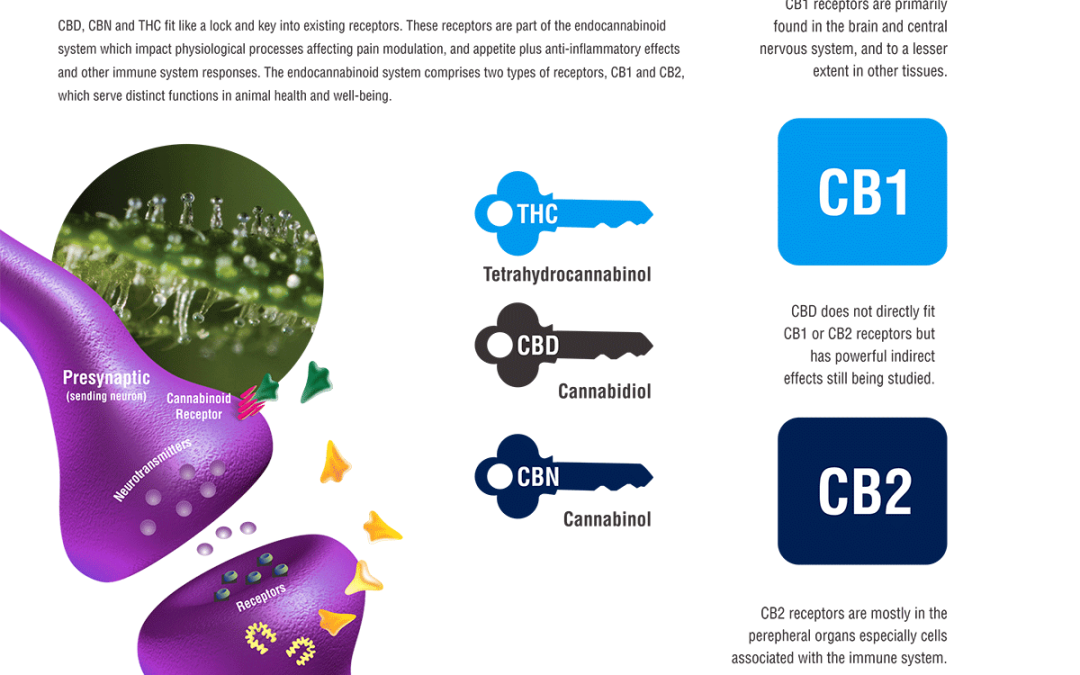 Our Fabulous Endocannabinoid System