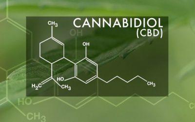 UK Gov says CBD is Medicine!